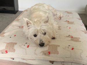 Maisey napping